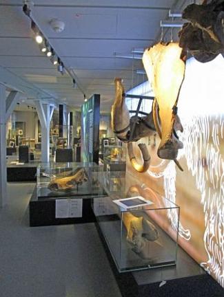 Neue Dauerausstellung©Museum Nienburg/Weser